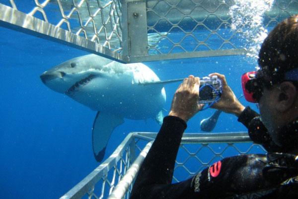 Bueceo con tiburones blancos en Sudáfrica