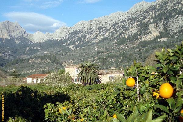 Naranjeros en Mallorca