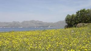 Primavera en Mallorca - Vacaciones diferentes