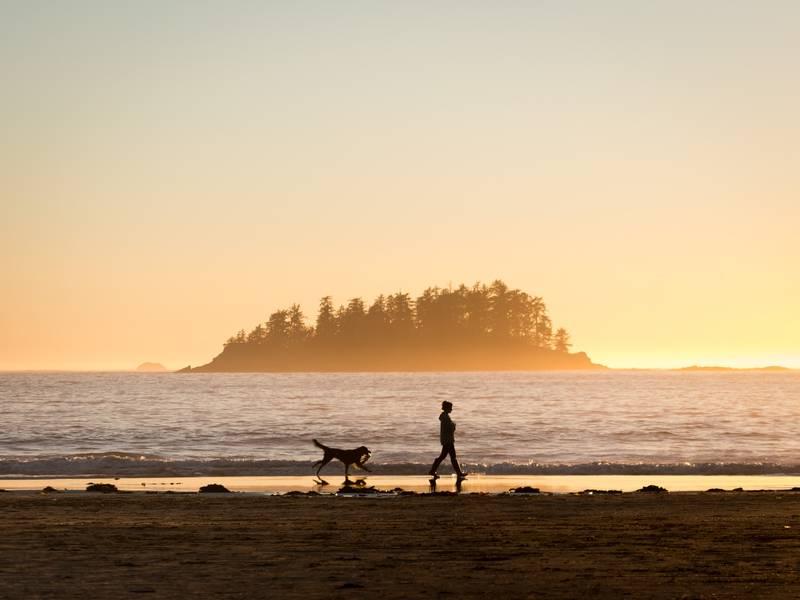 Perro y persona en la playa